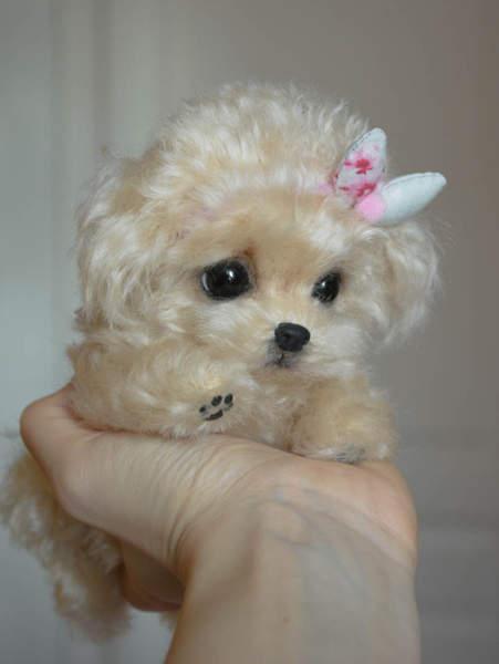Poodle puppy Fiona by Yuliya Zubareva